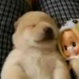 Als ich gerade das Video gesehen habe, hat es mich voll an unseren Tico erinnert. Er träumt auch ab und an im Schlaf und jagt dann irgendwas oder gibt laute […]