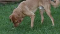 Ein Hund ist niemals berechenbar. So kommt auch der Tico immer wieder auf neue Idee um das Herrchen und Frauchen auf Trab zu halten. So auch letzte Woche, als er […]