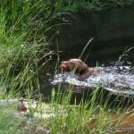 Frühschwimmer Tico